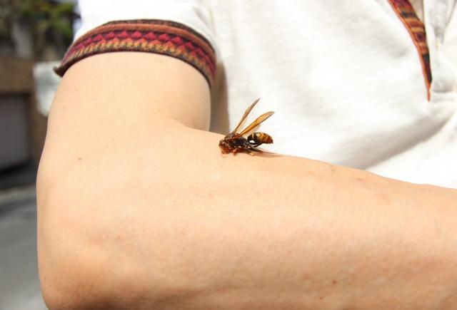 蜂にさされる